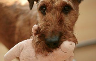 vaccin chien